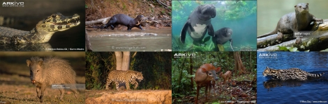 amazon-animals-hunted